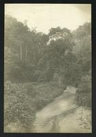 """Views (2 photos) """"on the Bolivian [railroad?]"""" (written on verso); one a view of a stream,  the other of a small bridge"""