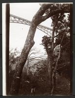View of bridge between trees