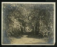 Pathway through trees with man, lady and dog
