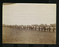 Soldiers standing in a line with their horses