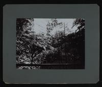 """View of a building through foliage from a porch.  On verso: """"U.S. Legation, San Jose, Cosa Rica.  Central Court (Patio) No. 2.  1904"""""""