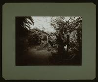 "View of a star-sharped garden arrangement.  On verso: ""U.S. Legation, San Jose, Cosa Rica.  Central Court (Patio) No. 1.  1904"""