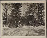 8x10 photo of winter woodlands (2 of 2)