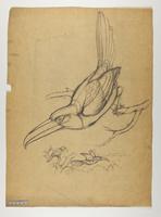 Unidentified pteroglossus sp.?