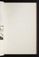 The birds of New Guinea, 1:84