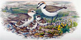 John Gould Ornithological Collection