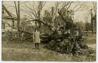 Children on uprooted tree (1911 Tornado)
