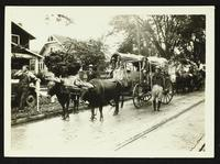 Prairie schooner pulled by oxen (75th Anniversary Historic Parade)