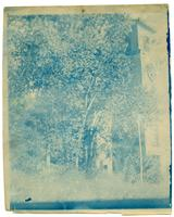 First Unitarian Church, View of South Side Through Trees